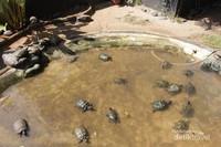 Begitu melewati pintu masuk, anda akan menemukan kolam yang berisikan kura - kura