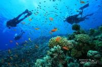Banyak terdapat spot diving dan snorkeling