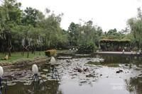 Kolam ikan di Taman Spathodea