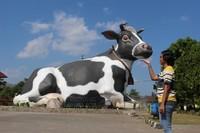Gedung pertemuan Lembu Suro yang unik