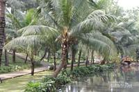 Pohon kelapa tumbuh subur di tepian danau