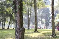 Barisan pohon yang menghiasi taman.