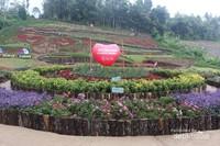 Beraneka ragam bunga dengan warna yang cantik memenuhi taman ini