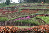Sebagian bunga-bunga ditanam membentuk gambar tertentu .
