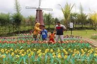 Kincir angin lengkap dengan bunga tulipnya.