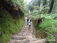 Jalur trekking menuju Kawah Domas dari area parkir Kawah Ratu sepanjang 1KM