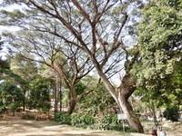 Taman belakang seluas 2 hektar yang asri dan tepat berada di kaki Gunung Ciremai, Jawa Barat