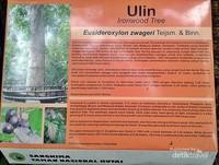 Papan informasi pohon ulin raksasa di Taman Nasional Kutai