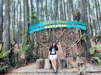 Ini Hutan Pinus yang Cantik di Sekitaran Yogyakarta