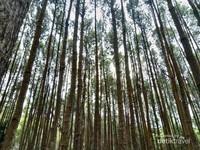 Sering juga disebut Hutan Pinus Imogiri