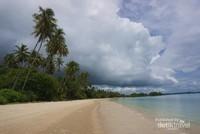 Lanskap pantai memanjang dengan tumbuhan pohon kelapa pada sisinya