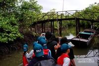 Pulang melewati aliran sungai diantara hutan mangrove yang lebat