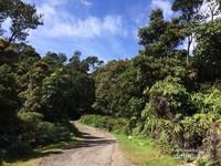 Ini adalah jalan yang merupakan akses menuju hutan