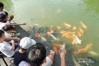 Pengunjung yang sebagian besar anak-anak terlihat antusias karena dapat memberi makan ikan seperti ini