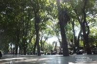 Sejuk pepohonan di Lapangan Puputan Badung