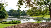 Sebuah danau di tengah taman