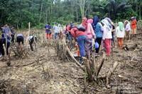 Tradisi Ngasak Padi. di dalam rangkaian acara festival Budaya Desa Kedang Ipil, wisatawan diajarkan cara menanam padi gunung secara tradisional.