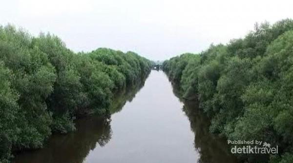 Traveler dapat menjelajah hutan ini dengan perahu dan kano yang disewakan