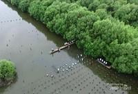 Ini adalah lokasi yang dipergunakan untuk menanam pohon bakau