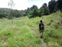 Jalan menuju Telaga Dringo