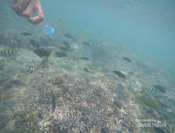 Keindahan terumbu karang di Gili Nanggu yang masih terjaga dan ikan-ikan kecil yang sangat indah dan lucu menjadikan Gili Nanggu sebagai spot snorkeling paling favorit. Tetapi hati-hati ya guys disini banyak bulu babi.