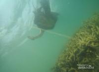 Keindahan terumbu karang Gili Nanggu yang masih terjaga kelestariannya.