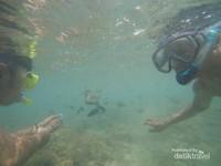 Bermain sambil memberikan makan ikan-ikan kecil yang lucu di Gili Nanggu.