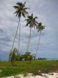 Ciri khas Pulau Manimbora dengan 3 pohon kelapa yang menjulang
