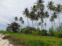 Pulau Manimbora lebih dikenal dengan nama Pulau Spongeboh karena mirip dengan pulau di film Spongebob yaitu Bikini Bottom