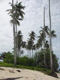 Pulau ini tidak terlalu luas sehingga dapat disinggahi dalam waktu singkat