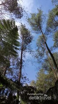 Meski panas namun tetap teduh karena pohon pinus yang banyak