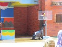 Singa laut ini jago bermain basket