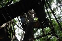 Tangga kayu yang harus dilewati pengunjung untuk menuju canopy bridge.