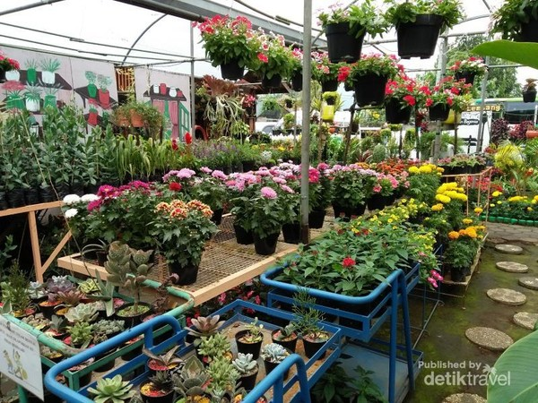 Selfie Sampai Puas Di Kebun Bunga Cantik Ini