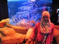 Bersama kepiting laut ukuran besar atau Crabzilla