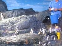 Ada juga pinguin yang lucu dan menggemaskan