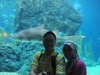 Traveler bisa berfoto dengan ikan hiu di sini