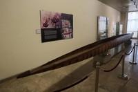 Di museum ini traveler juga bisa menjumpai perahu berukuran panjang khas Papua yang unik.