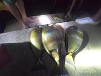 Jenis ikan tangkapan