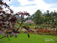 Taman bunga ini sebenarnya adalah bagian dari sebuah villa atau seperti guest house milik pribadi yang dibuka untuk umum.