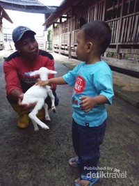 memberi susu kepada cempek dan bermain bersama cempek :D