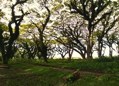Hutan Lord of The Ring Ada di Banyuwangi