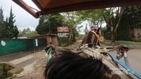 Saking paginya berkeliling beberapa objek wisata belum buka, seperti De Ranch yang masih tutup
