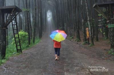 Hutan Pinus Kekinian di Magelang