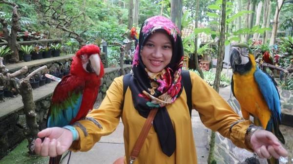 Tempat Asyik Lihat Burung Di Bandung