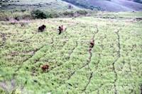 Sekawanan kuda peliharaan merumput di Bukit Lendonggara (dok pribadi)