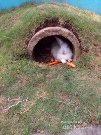 Bisa main dengan kelinci