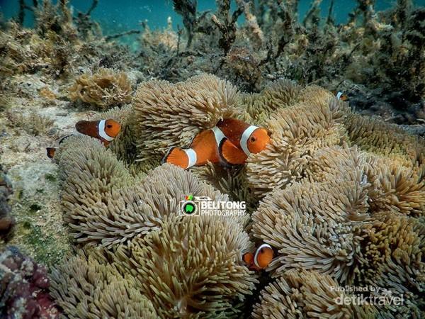 Biota laut di Pulau Tukong Kik May