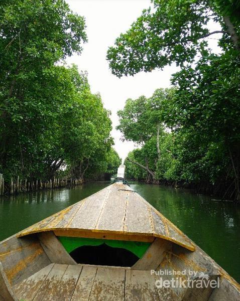 Percaya Nggak? Ada Hutan Mangrove Cantik di Bekasi