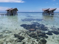 Terumbu karang dapat terlihat jelas dari dekat